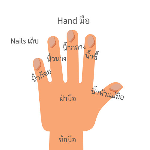 Hand and fingers in Thai Language
